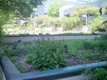 Jaguar Garden