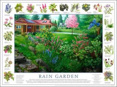 raingarden_poster_dec2008[1]